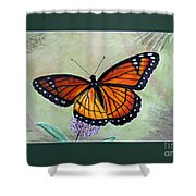 Viceroy Butterfly By George Wood Shower Curtain