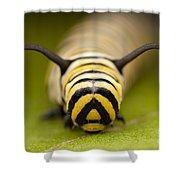 Monarch Butterfly Caterpillar I Shower Curtain