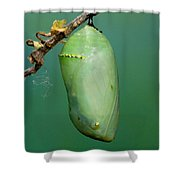 Monarch Butterfly Chrysalis Developing Shower Curtain