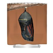 Monarch Butterfly Chrysalis II Shower Curtain
