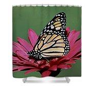 Monarch Butterfly Danaus Plexippus Shower Curtain