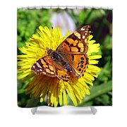 Monarch Butterfly Feeding On A Yellow Dandelion Flower Shower Curtain