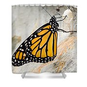 Monarch Butterfly Just Emerged From Her Chrysalis Shower Curtain