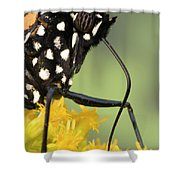 Monarch Butterfly Male Feeding Shower Curtain
