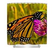 Monarch Butterfly On Flower Shower Curtain