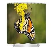 Monarch Butterfly On Goldenrod Shower Curtain