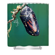 Monarch Butterfly Ready To Emerge Shower Curtain