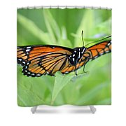 Monarch Butterfly Rocking Chair Shower Curtain