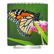 Monarch Butterfly Simple Pleasure Shower Curtain
