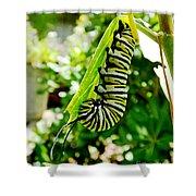 Monarch Caterpillar 5 Shower Curtain