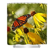 Monarch Days 1 Shower Curtain