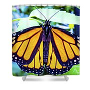 Monarch I Shower Curtain