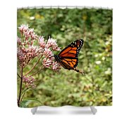 Monarch Of The North Shower Curtain