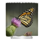 Monarch Of The Wild Shower Curtain