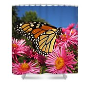 Monarch On Pink Asters Shower Curtain