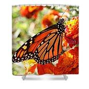 Monarch On Marigold Shower Curtain