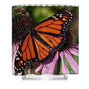 Monarch On Purple Coneflower Shower Curtain