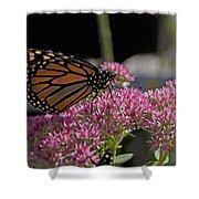 Monarch On Sedum Shower Curtain