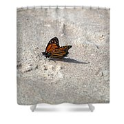 Monarch On The Beach Shower Curtain