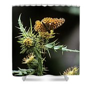 Monarch On Thistle Shower Curtain