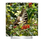 Monarch Pause Shower Curtain
