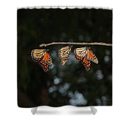 Monarch Trio Shower Curtain