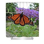 Monarch Under Flowers Shower Curtain