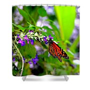 Monarch With Sweet Nectar Shower Curtain