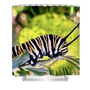 Monarch's Caterpillar.nz Shower Curtain