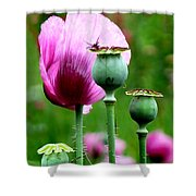 Monet's Garden-giverny Shower Curtain