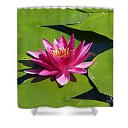 Monet's Waterlily Shower Curtain