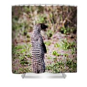 Mongoose Standing. Safari In Serengeti Shower Curtain