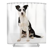 Mongrel Dog, Border Collie Cross Shower Curtain