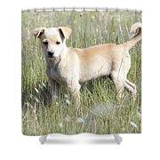 Mongrel Dog Puppy Shower Curtain