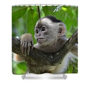 Monkey Business Shower Curtain by Bob Christopher