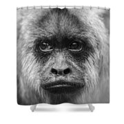 Monkey Eyes Shower Curtain