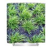 Monkey Grass Abstract Shower Curtain