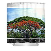 Monkey Pod Trees - Kona Hawaii Shower Curtain