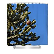 Monkey Puzzle Tree A Shower Curtain