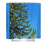 Monkey Puzzle Tree Shower Curtain