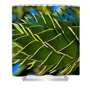Monkey Puzzle Tree D Shower Curtain