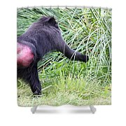 Monkey Showing Red Bottom Shower Curtain