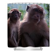 Monkey's Attention Shower Curtain