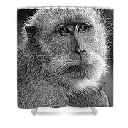 Monkey's Eyes Shower Curtain