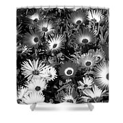 Monochrome Asters Shower Curtain