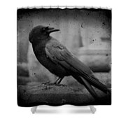 Monochrome Crow Shower Curtain