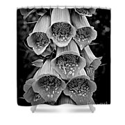 Monochrome Foxglove Shower Curtain