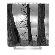 Monochrome Trees Shower Curtain