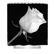 Monochrome White Rose Shower Curtain