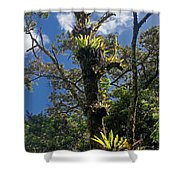 Montagne D'ambre National Park Madagascar 4 Shower Curtain